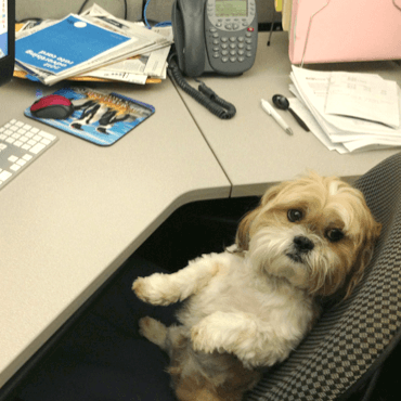 Best Company Perks Dogs Pets