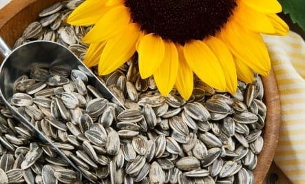 sunflower-seeds
