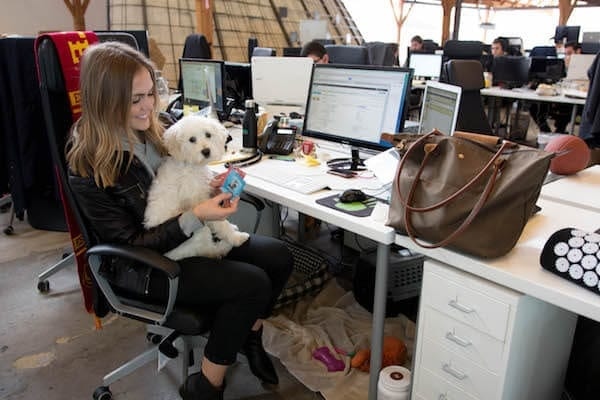 layla-dog-pet-office